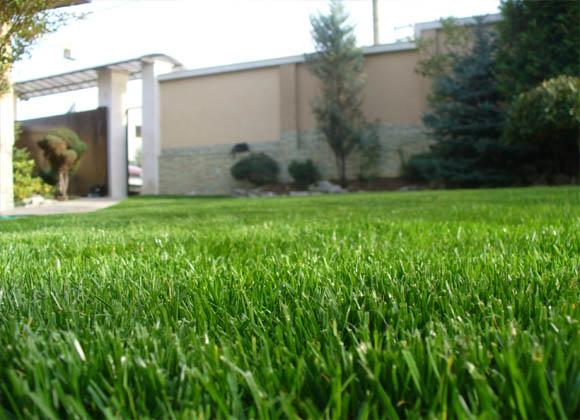 Окосена тревна площ в частна градина