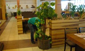 Засаждане на интериорно растение в кашпа