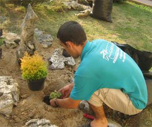 Засаждане на храсти и цветя за алпинеум